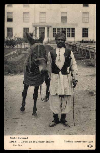 INDIA, Indian muleteer type