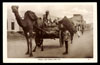 YEMEN, Aden, Maala Lord Camels and cart